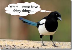 Magpie2_i-love-shiny-things